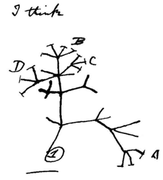 Darwin_tree_notebook-B_1837